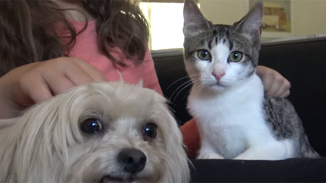 Heres Proof That Scaredy Dogs Are Funnier Than Scaredy-Cats